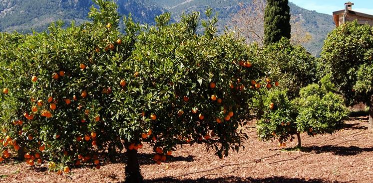 Wir leben da, wo die Orangen wachsen