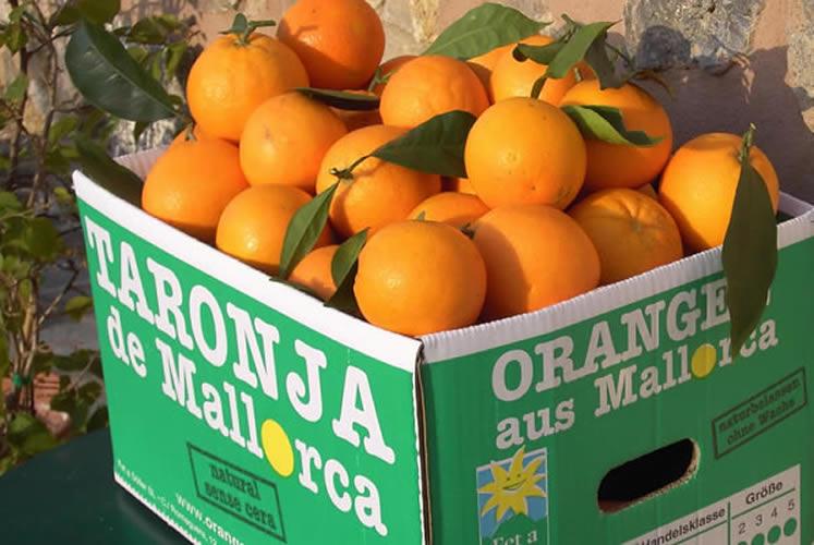 Die Orangen aus dem Sollertal haben HOCH-Zeit!