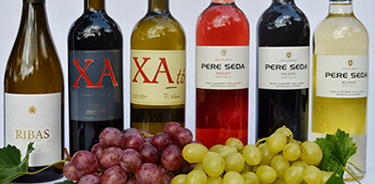 TASTE THE WINE OF MALLORCA