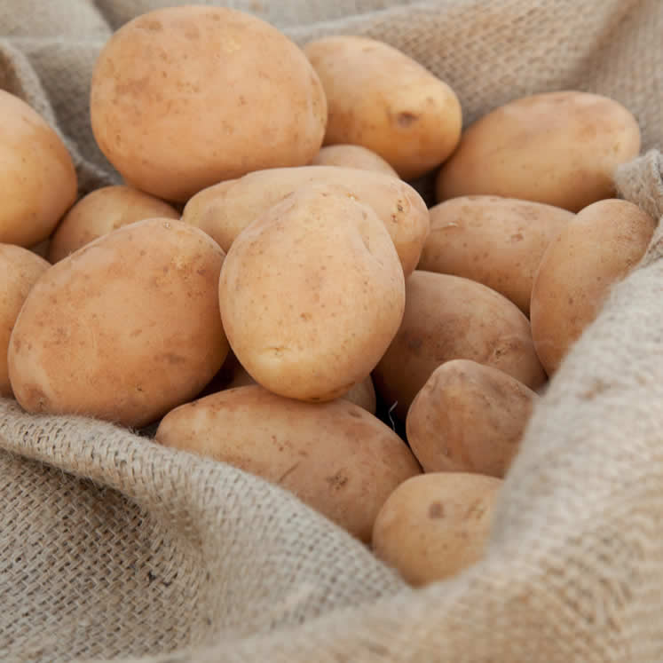 Patata (freshly harvested potatoes from Mallorca)