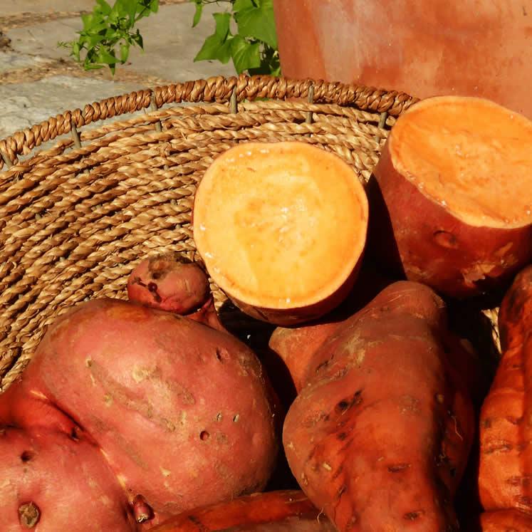 Süßkartoffel Boniato 1KG