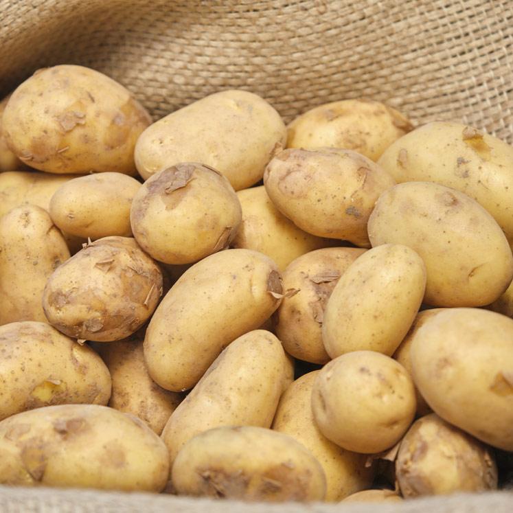 Erntefrische BIO Mini Kartoffeln aus Mallorca