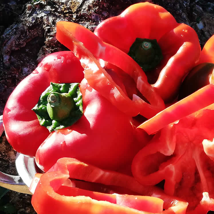 Red Peppers - Pimiento rojo