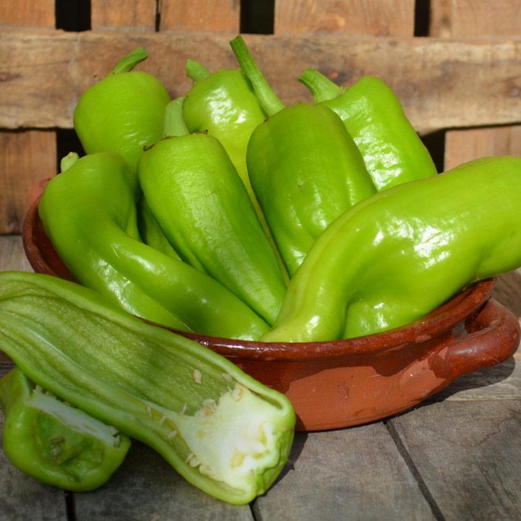 Grüne milde Paprika