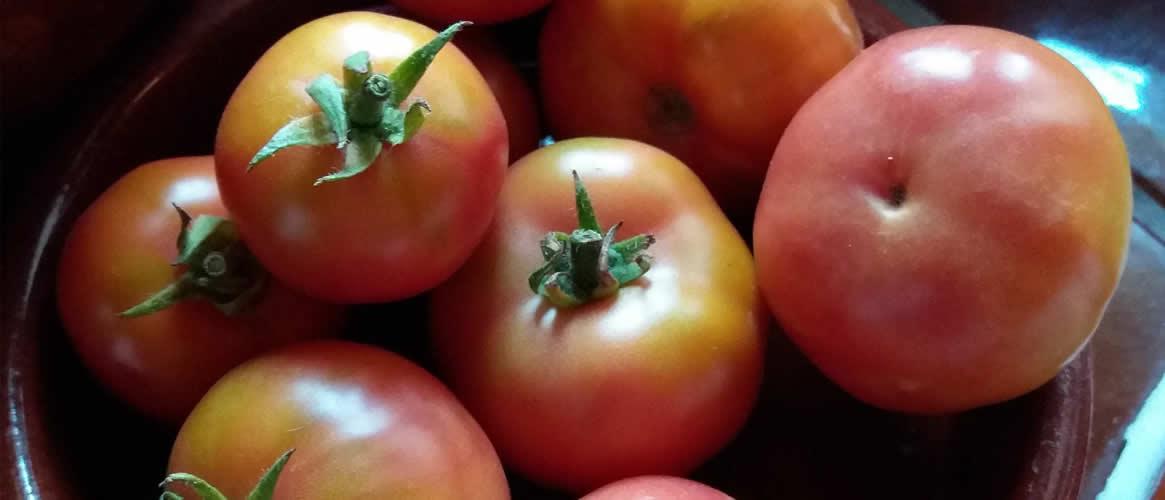 Tomates de  Ramallet