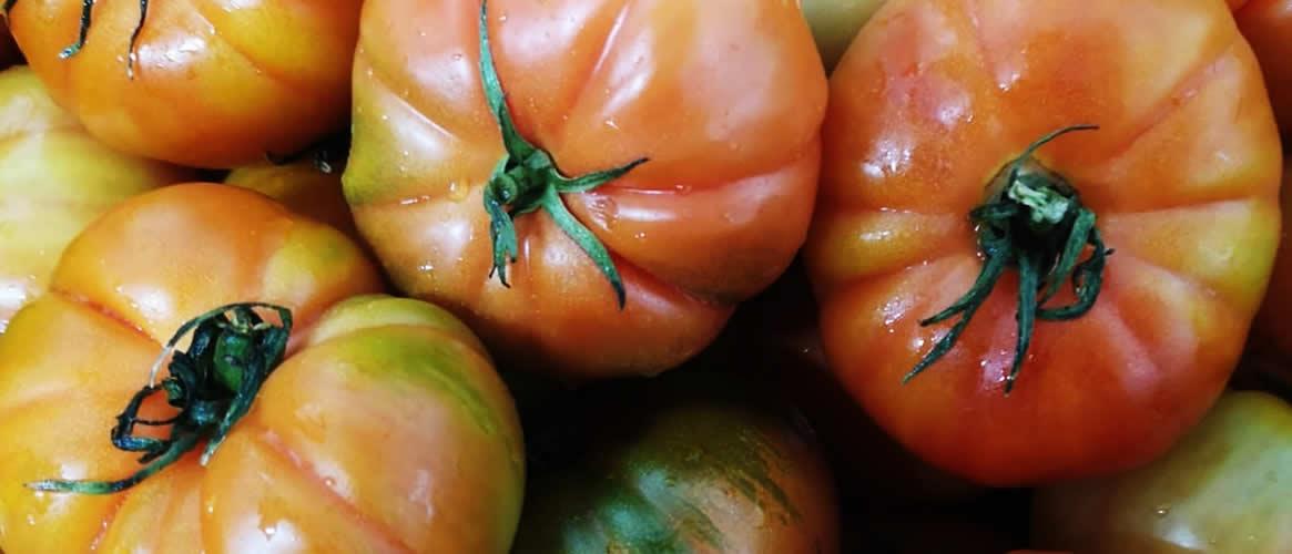 Raf Thick tomato