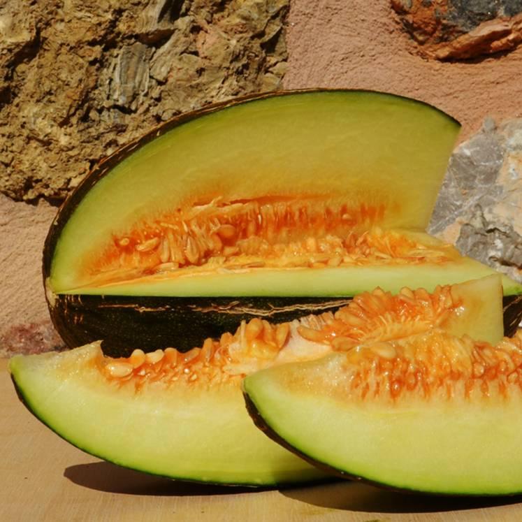 Melone - Melón Piel de Sapo