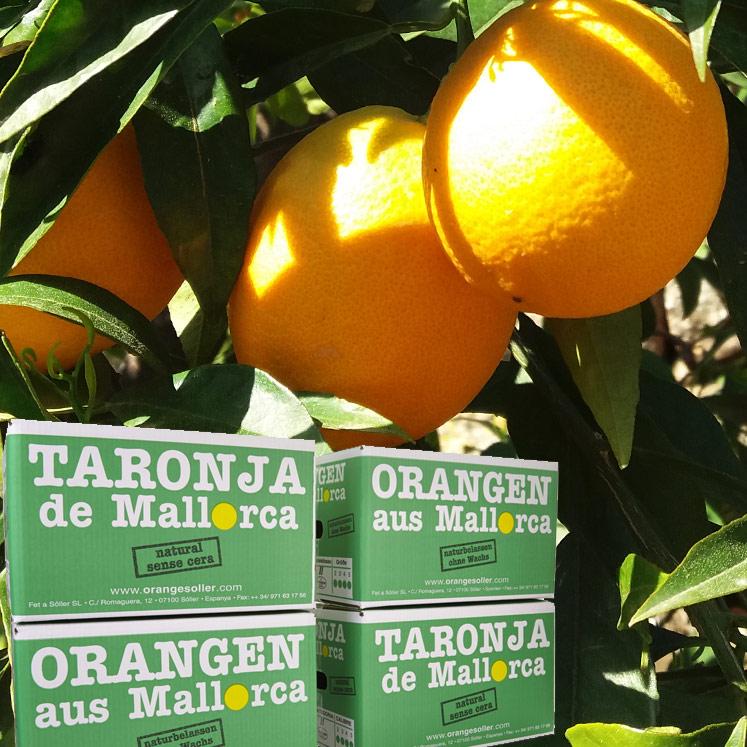Peret Orangen Abo 4 x 10kg Kiste