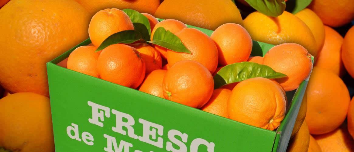 Vorbestellung Orangen Abo 4 x 10kg Kiste
