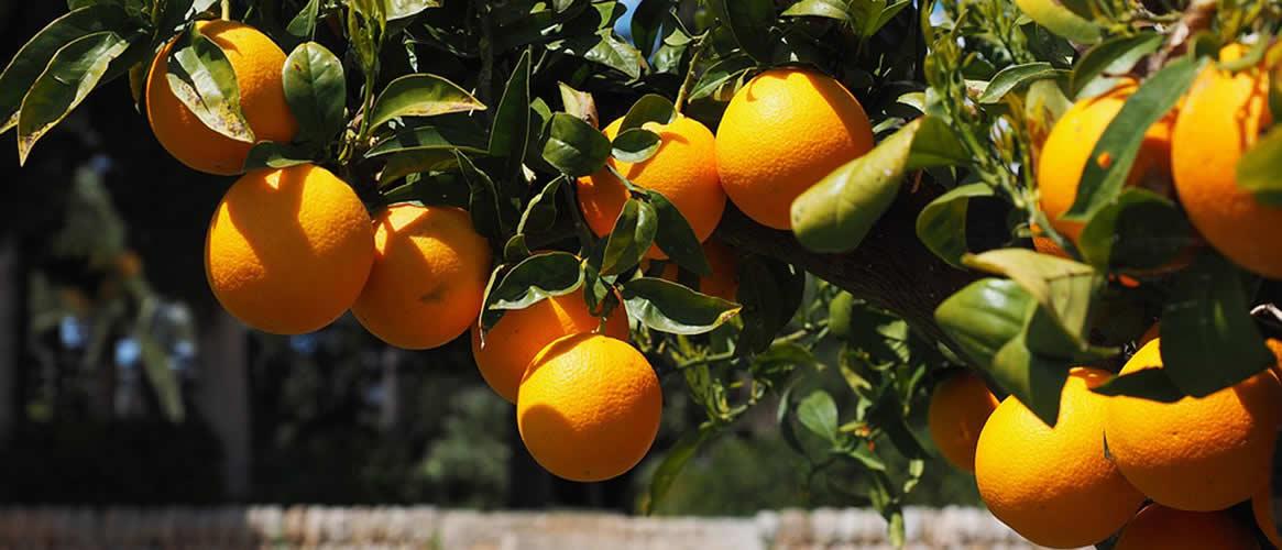 Orangen Abo 4 x 10kg Kiste