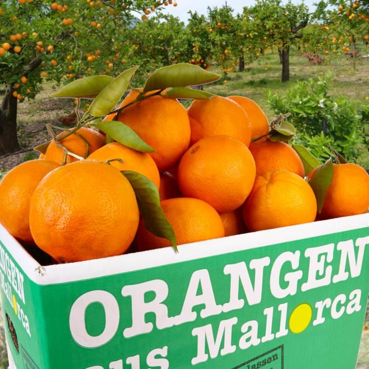 Orangen Abo 8 x 10kg Kiste