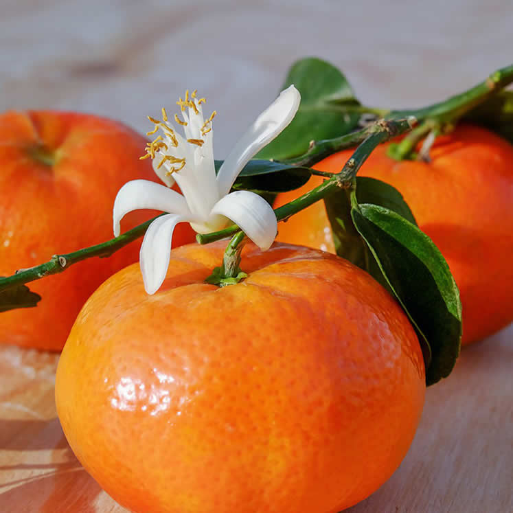 Clementines 1kg