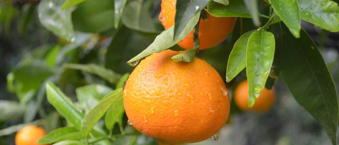 Clementinen 1kg