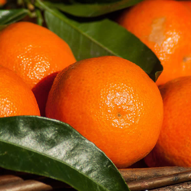 Clementines 10kg box