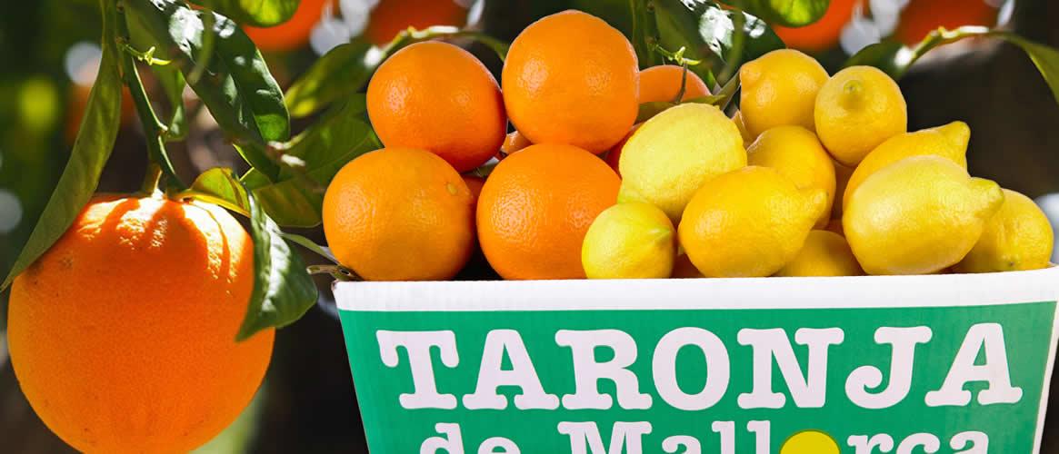 Orangen und Zitronen Abo 4 x 10kg Kiste