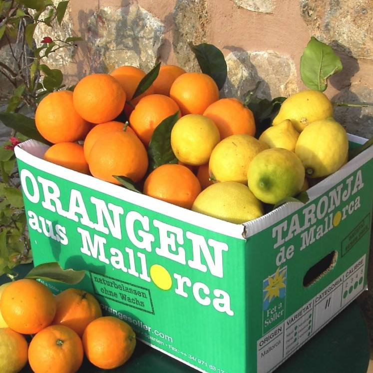 Pre-order: Mix box oranges and lemons 10kg