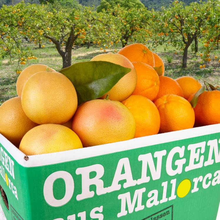Mixed box Oranges and Grapefruits 10kg