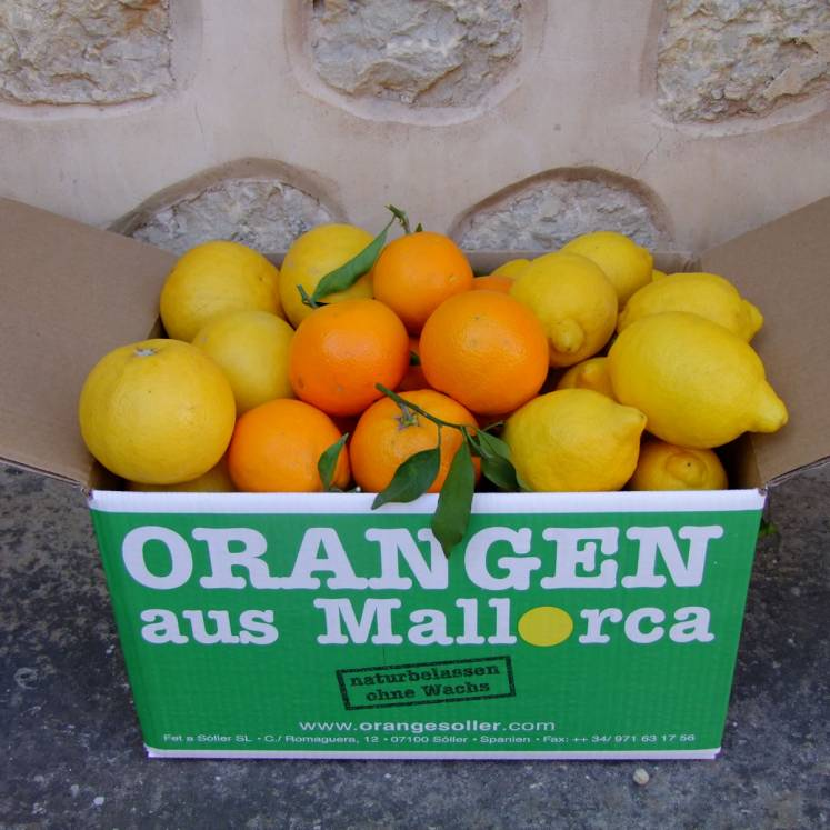 Mixed box of 10kg Oranges, Grapefruits and lemons