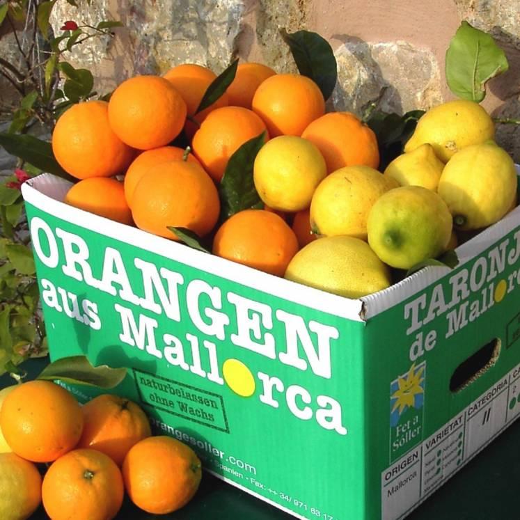 Mischkiste Valencia, Peret Orangen und Zitronen 10kg