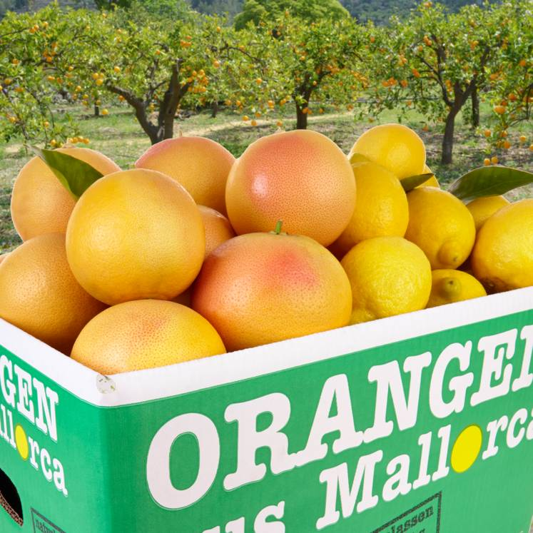 Mixed box grapefruits and lemons 10kg