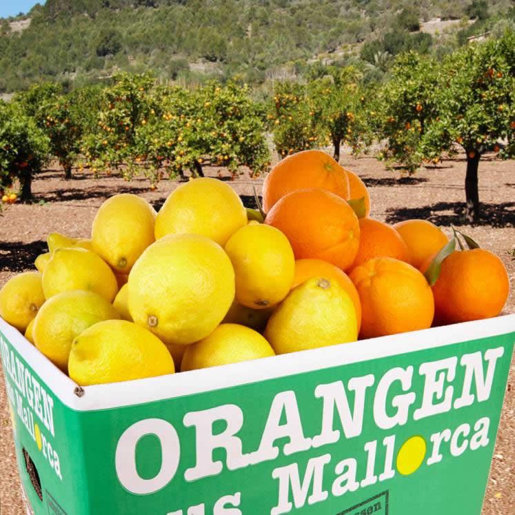 Mischkiste Peret Orangen und Zitronen 10kg