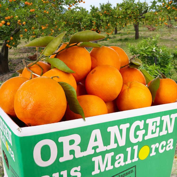 Orangen 10kg Kiste