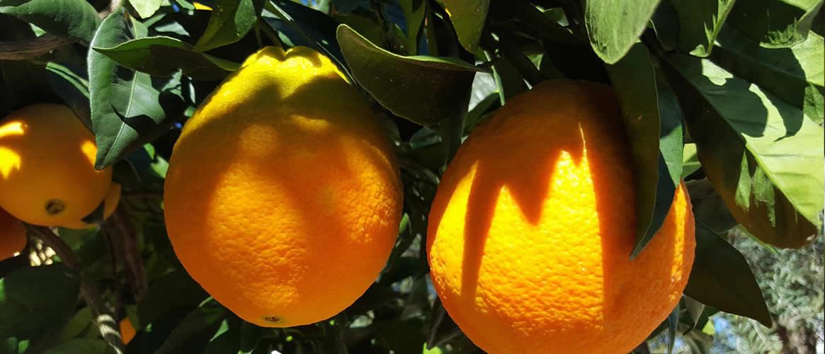 Peret Orangen 10kg Kiste