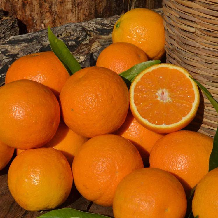 Ernte beendet: Valencia Late Orangen 10kg Kiste
