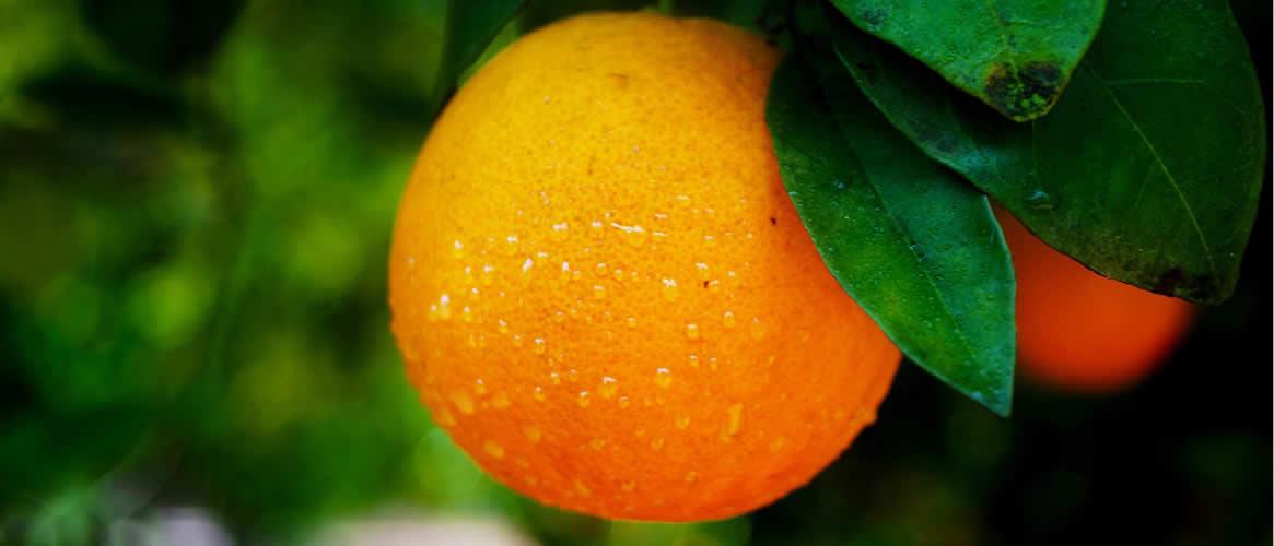 Canoneta Orangen 1kg