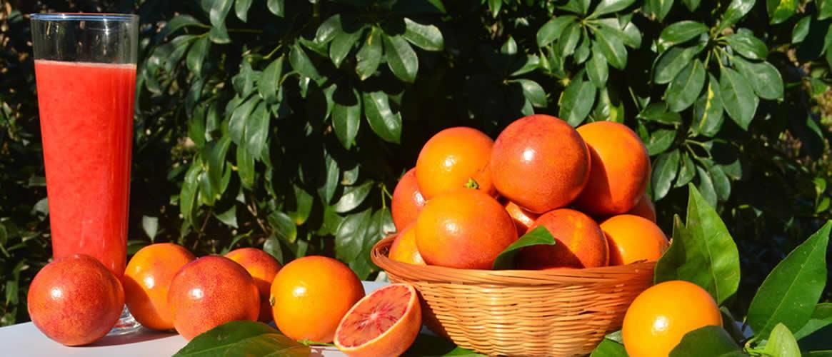 Oranges sanguines 10kg