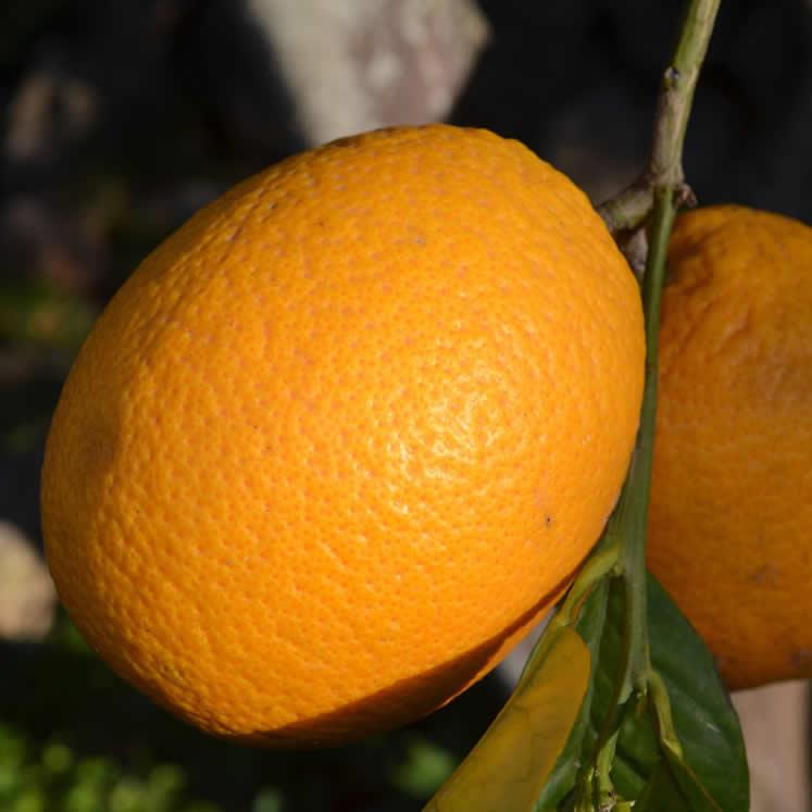 Peret Orangen 1kg