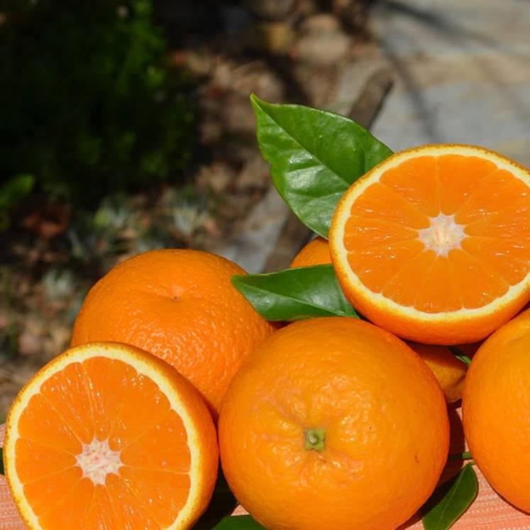 Orangen 1kg
