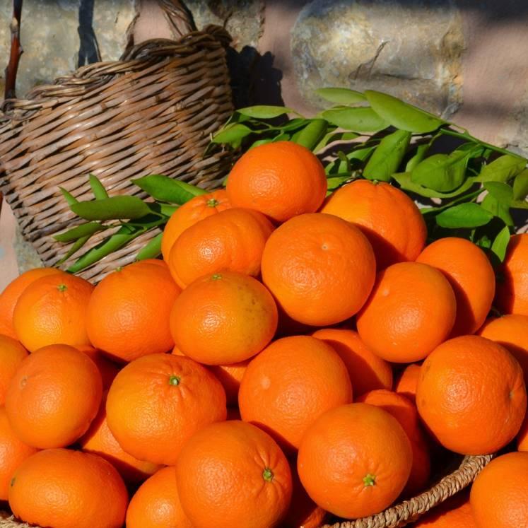 Ortanique Orangen 1kg