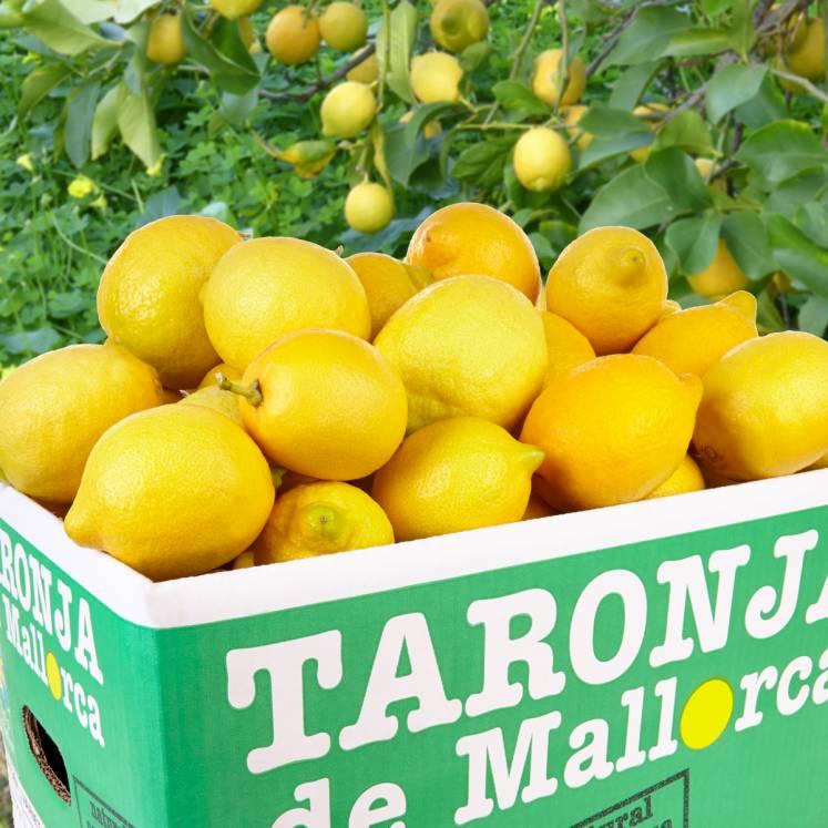 Zitronen 10kg Kiste