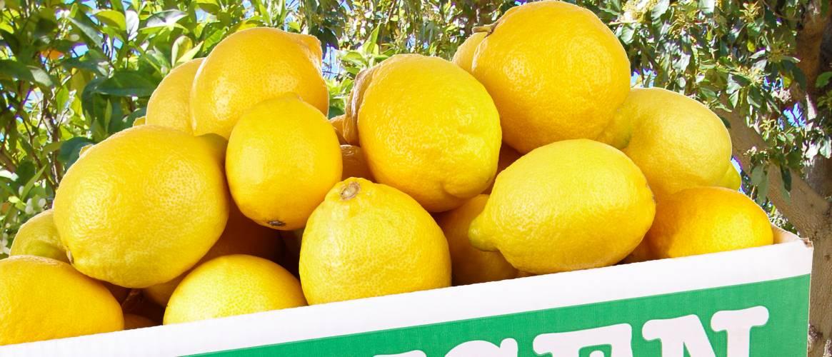 Citrons caixxe de 10kg