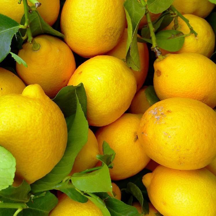 Zitronen 1kg