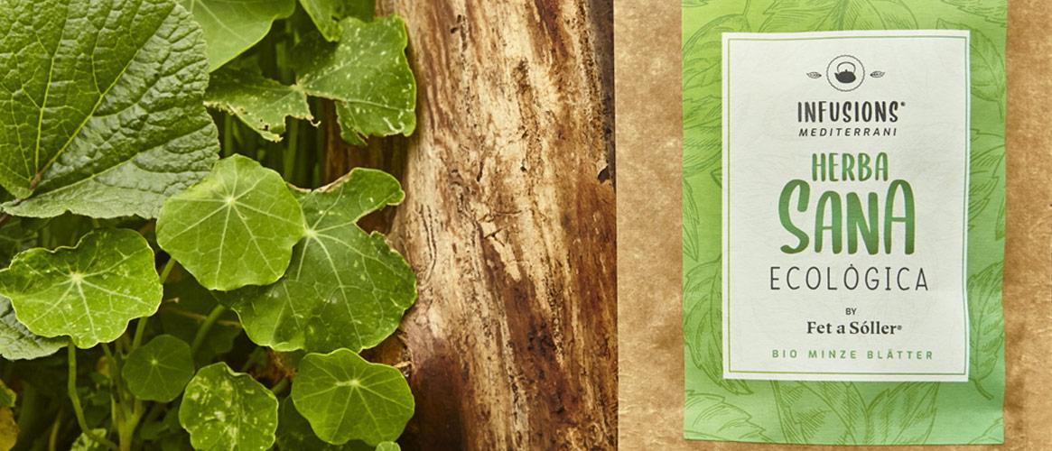 Bio Tee Hierbabuena - Grüne Minze
