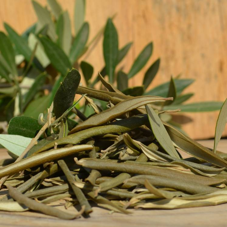 Fulla Olivera, dried Organic Olive tree leaves