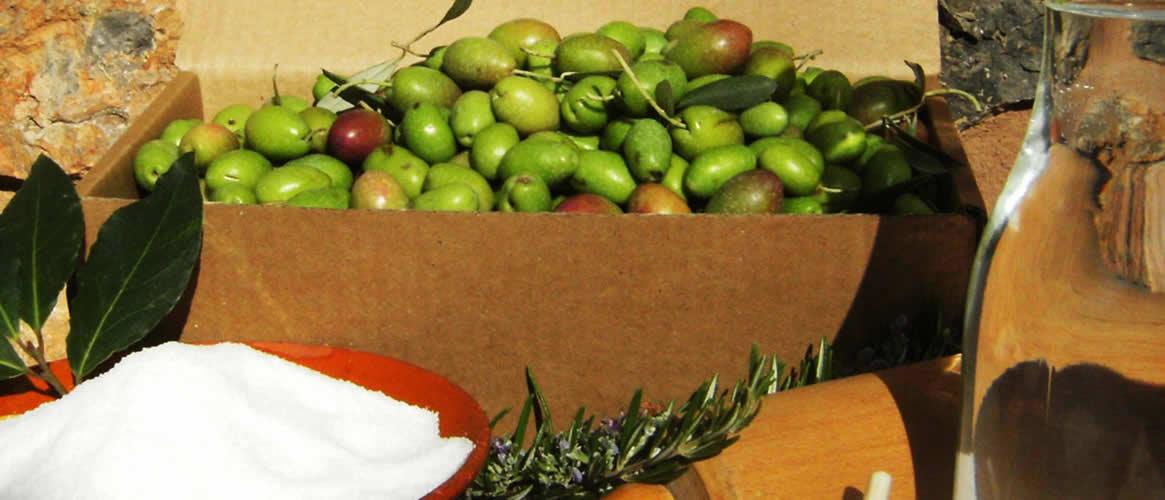Frische grüne Oliven aus Mallorca zum Selbsteinlegen