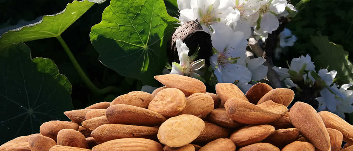 Bonany raw unpealed almonds 500g