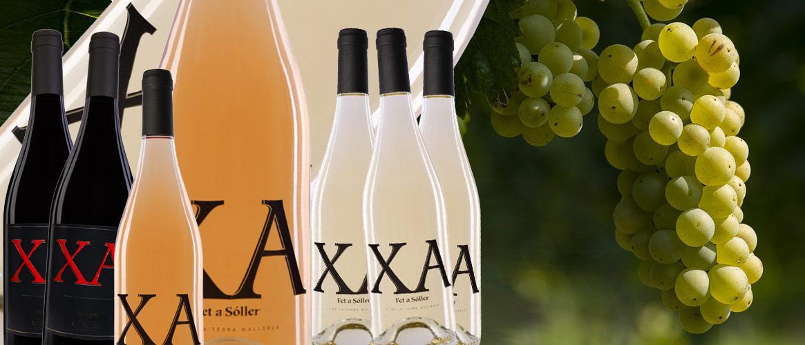 12 x XA Wein gemischt blanco rosado negro