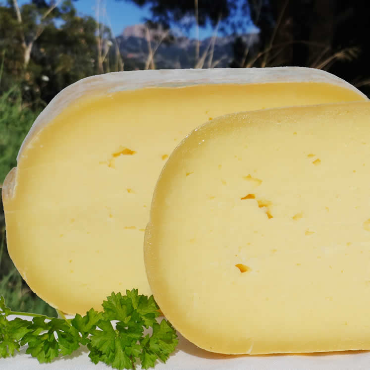 Burguera Cowmilk cheese semi matura