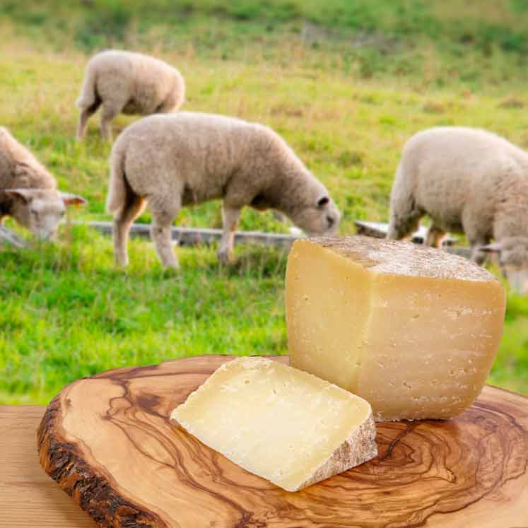 Son Cánaves organic sheep cheese mature