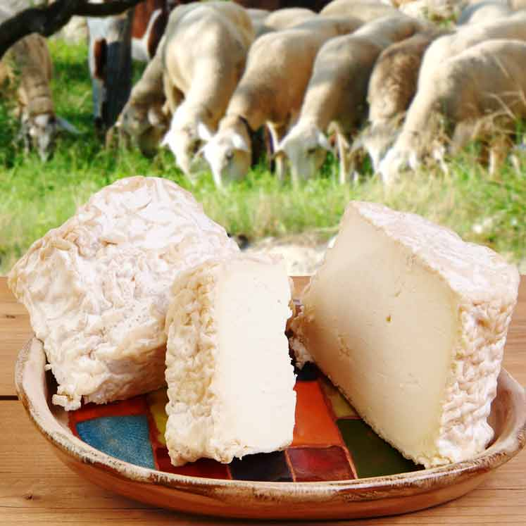 Son Cánaves organic young sheep cheese