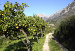 The valley of Sóller offers many footpaths and travelling routes