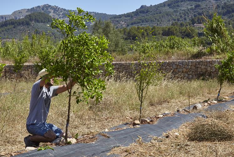 Horts de Sóller - unserer ersten Pflanzungen