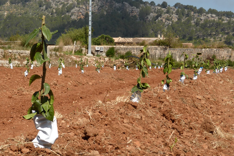 Horts de Sóller - nuestra primera plantación