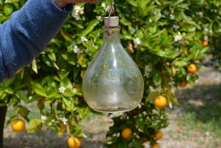 Die traditionelle Fliegenfalle zum Schutz vor Schädlingen