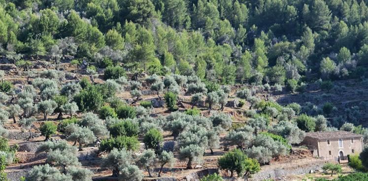 Mallorca im Mittelmeerklima: Ein wahrer Garten Eden
