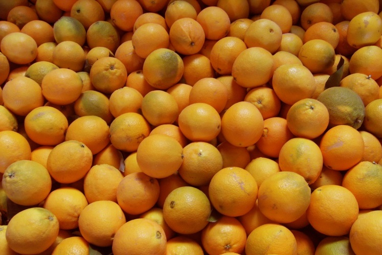 Unsere frisch geernteten Navelinas aus dem Orangen-Tal